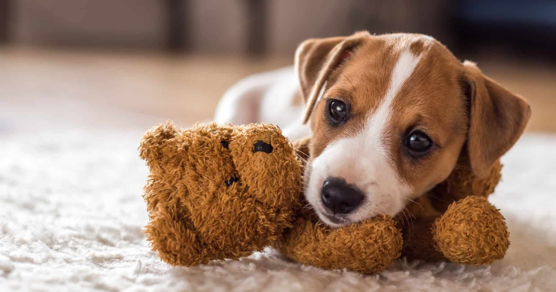 Das Sagt Das Mietrecht Zur Hundehaltung Vermietet De